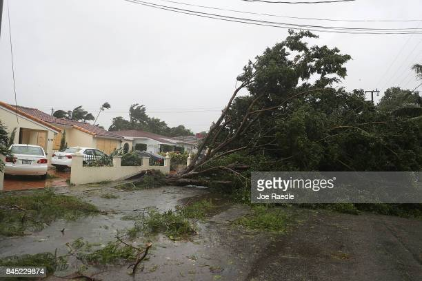 Trees and branches are seen after being knocked down by the high winds as hurricane Irma arrives on September 10 2017 in Miami Florida Hurricane Irma...