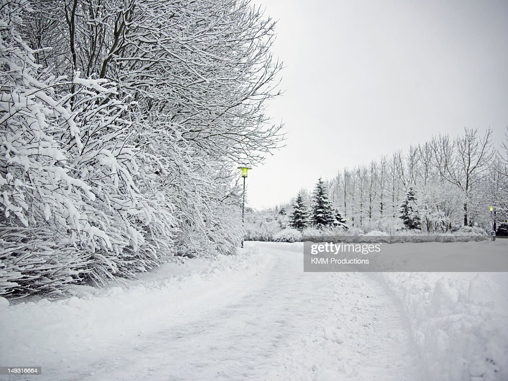 Trees and dirt path in snowy landscape : Stock Photo