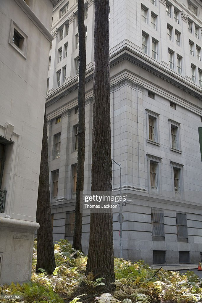 Trees and ferns emerging from alley : Stock Photo