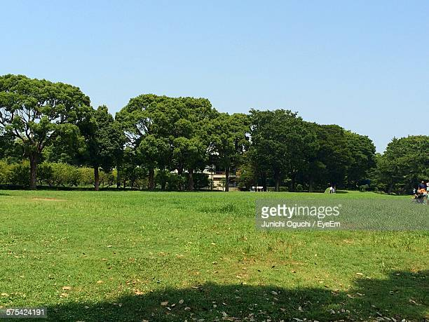 Trees And Grass On Field Against Clear Blue Sky