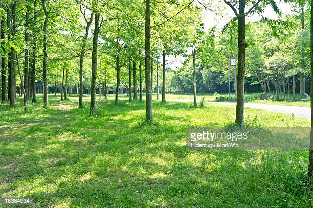 Trees and grassland in a park