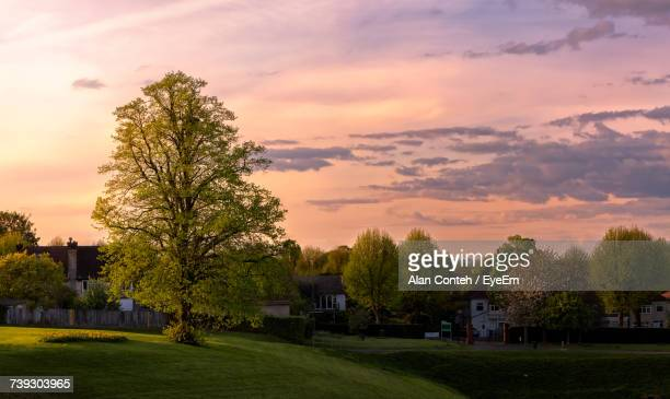 Trees And Houses Against Sky During Sunset