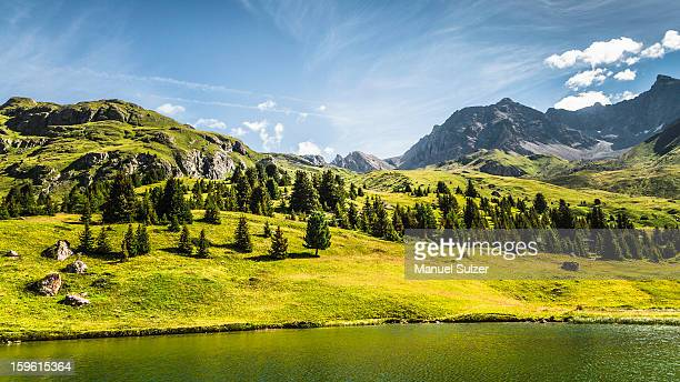 Trees and lake in grassy rural landscape