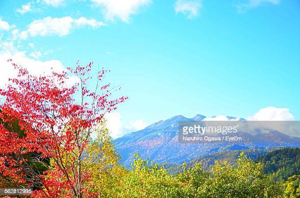 Trees And Mountains Against Blue Sky