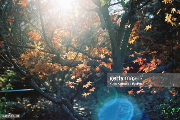 Trees And Plants In Autumn
