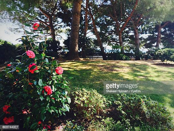 Trees And Plants On Grassy Field