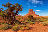 Trees and rocks in Monument Valley, Arizona
