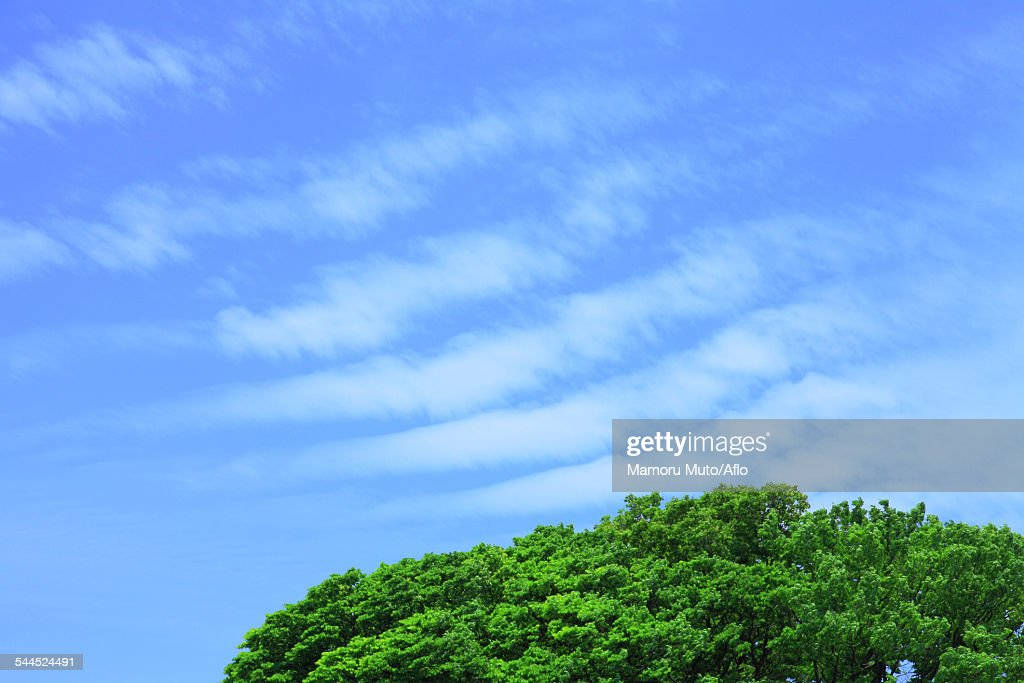 Trees and sky with clouds
