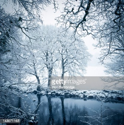Trees and still lake in snowy landscape : Stock Photo