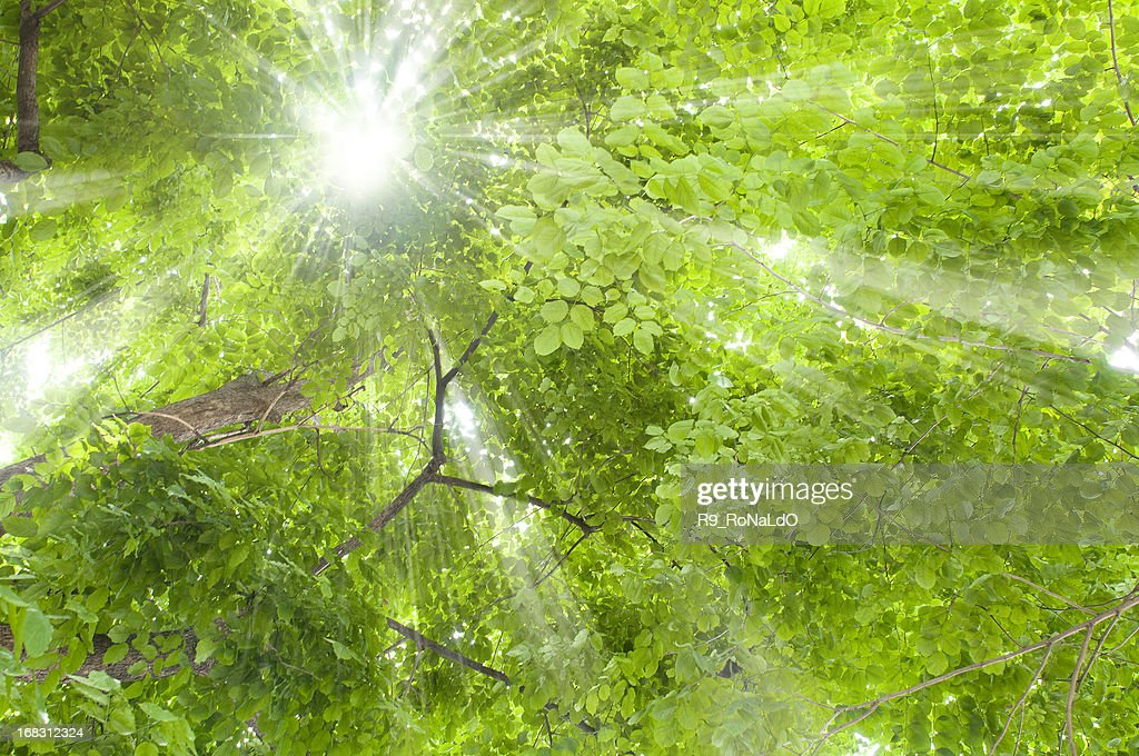 Trees and sunlight : Stock Photo