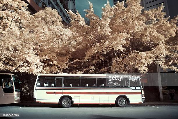 Trees and tour buses