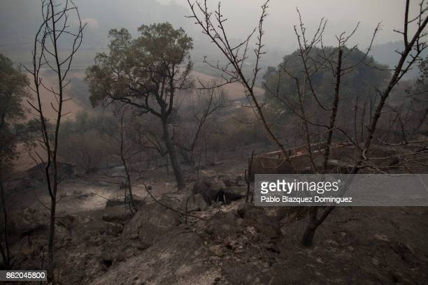 Trees are burnt around the village of Vila Nova near Vouzela on October 16 2017 in Viseu region Portugal At least 30 people have died in fires in...
