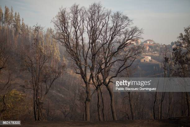 Trees are burnt near Penacova on October 17 2017 in Coimbra region Portugal At least 37 people have died in fires in Portugal and 4 others in Spain...