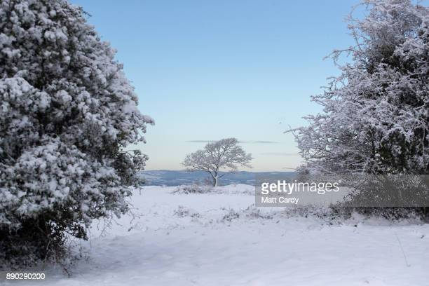 Trees are covered in snow on Rodborough Common close to the town of Stroud on December 11 2017 in Stroud Gloucestershire England Temperatures...