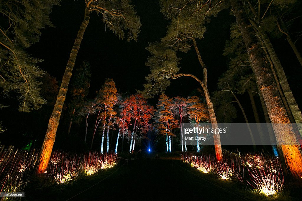 Trees are illuminated at preview for this years Enchanted Christmas at the Forestry Commissions National Arboretum at Westonbirt, Gloucestershire on November 27, 2013 in Tetbury, England. Enchanted Christmas, is Westonbirts signature winter event, aimed to inspire festive cheer with an illuminated one mile tree-lined trail through the arboretum and takes place every Friday, Saturday and Sunday evening from Friday 29 November to Sunday 22 December.