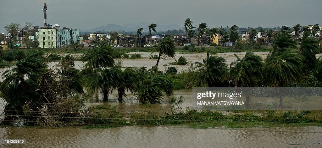 Trees are pictured amid floodwaters near Gopalpur village on October 13, 2013. Cyclone Phailin left a trail of destruction along India's east coast and up to seven people dead after the biggest evacuation in the country's history helped minimise casualties.