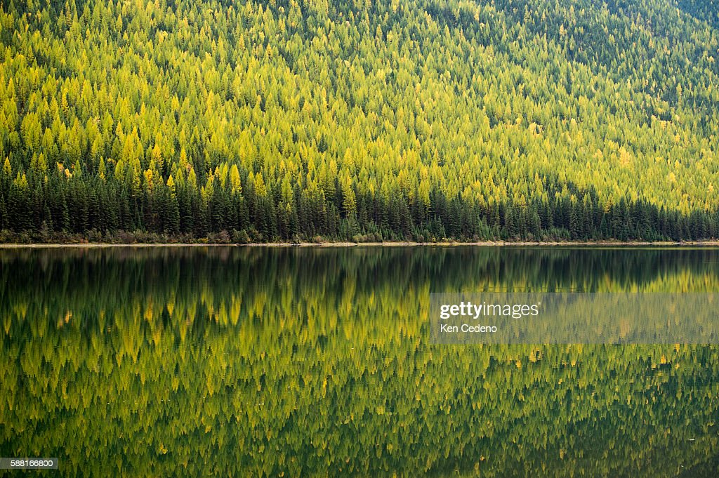 Trees are reflected in Stanton Lake located in the Great Bear Wilderness just south of Glacier National Park Oct 13 2013 Photo Ken Cedeno
