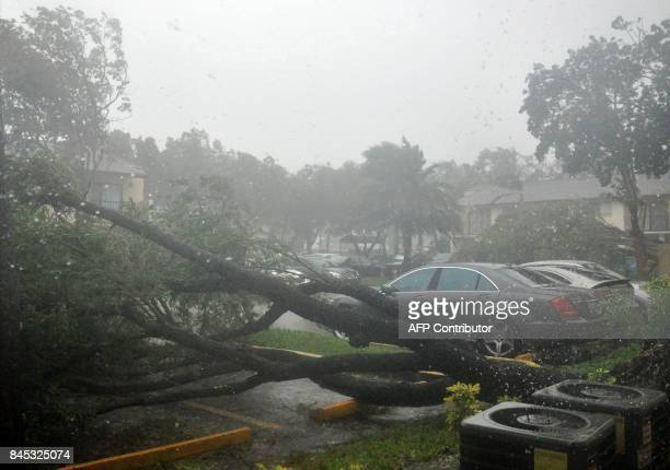 Trees are seen blown over in a parking lot as hurricane Irma moves through the area of Pembroke Pines Florida on September 10 2017 Hurricane Irma...