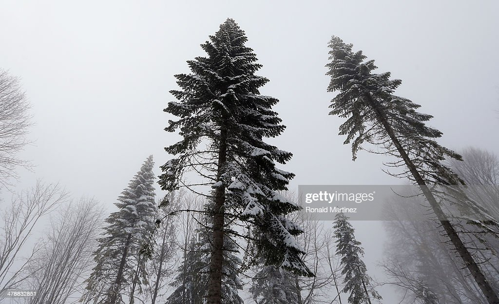 Trees are seen in the fog after the Mixed 4 x 2.5km Relay Cross-Country Skiing event during day eight of Sochi 2014 Paralympic Winter Games at Laura Cross-country Ski & Biathlon Center on March 15, 2014 in Sochi, Russia.