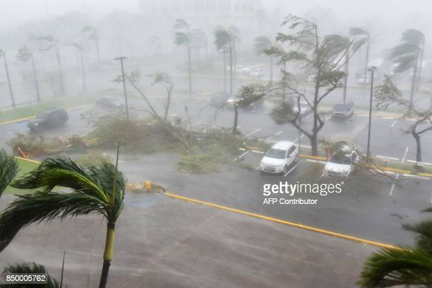 Trees are toppled in a parking lot at Roberto Clemente Coliseum in San Juan Puerto Rico on September 20 during the passage of the Hurricane Maria...