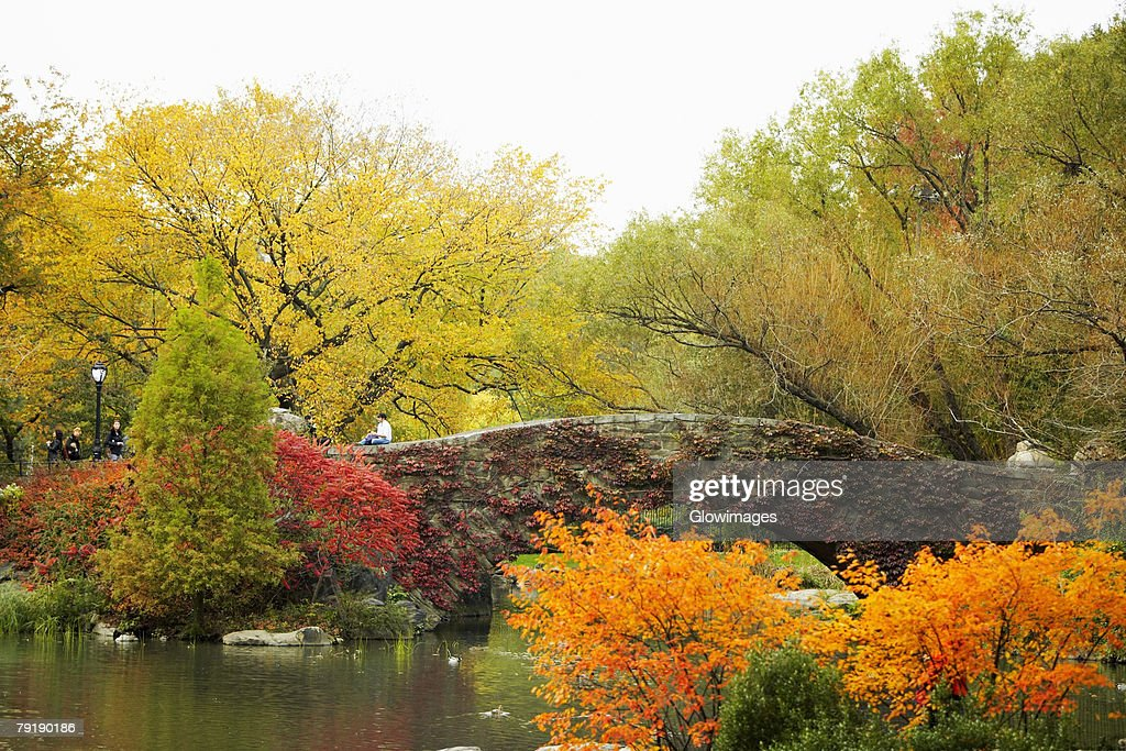 Trees around a footbridge, Central Park, Manhattan, New York City, New York State, USA : Stock Photo