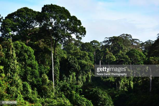 Trees at Danum Valley Conservation park