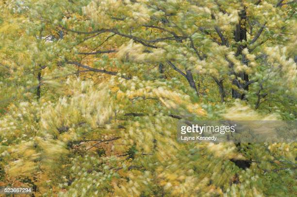 Trees at Lanes Island Preserve