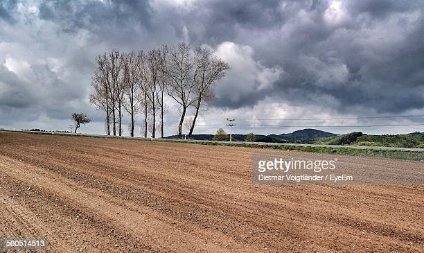 Trees At Plowed Field