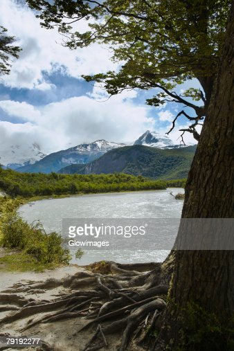 Trees at the lakeside with mountains in the background, Lake Argentino, Argentine Glaciers National Park, Patagonia, Argentina : Foto de stock