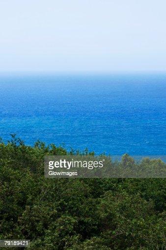 Trees at the seaside, South Point, Big Island, Hawaii Islands, USA : Stock Photo