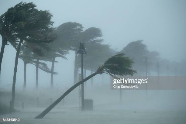 Trees bend in the tropical storm wind along North Fort Lauderdale Beach Boulevard as Hurricane Irma hits the southern part of the state September 10...