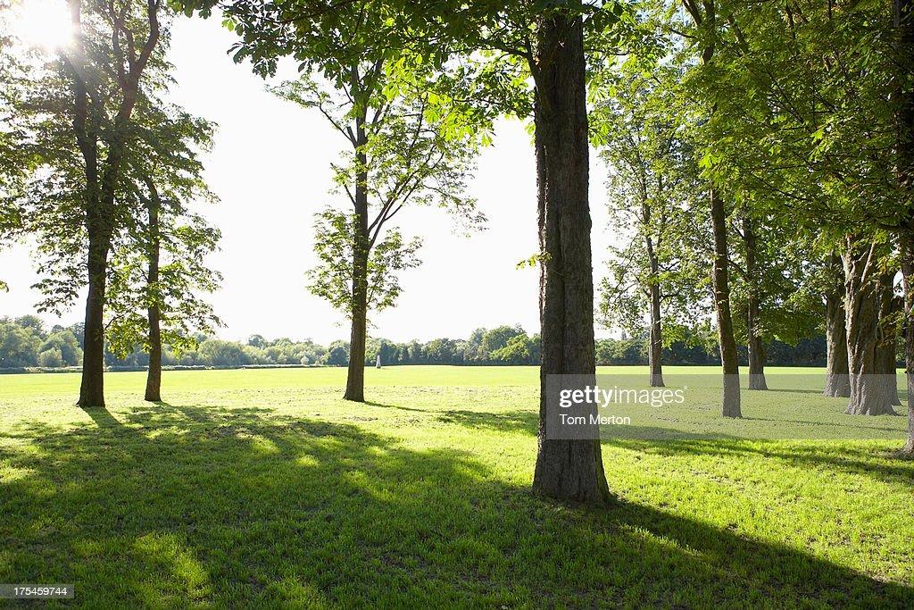 Trees beside field : Stock Photo