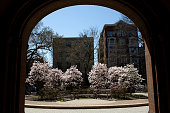 Trees bloom on the campus of Yale University April 16 2008 in New Haven Connecticut New Haven boasts many educational and cultural offerings that...
