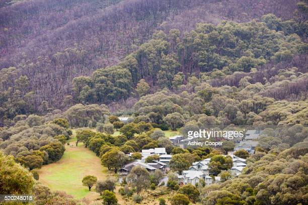 Trees burned by bush fire near Thredbo resort