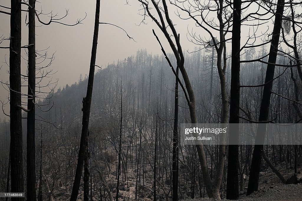 Trees burned by the Rim Fire are seen at Camp Mather on August 23, 2013 near Groveland, California. The Rim Fire continues to burn out of control and threatens 4,500 homes outside of Yosemite National Park. Over 2,000 firefighters are battling the blaze that entered a section of Yosemite National Park overnight and is only 2 percent contained.