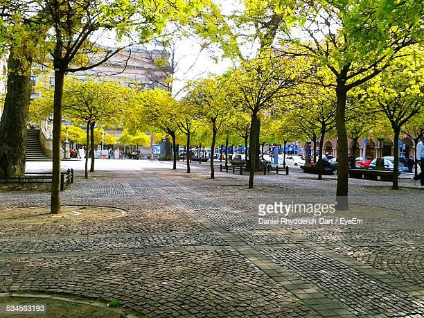 Trees By Sidewalk In City During Autumn