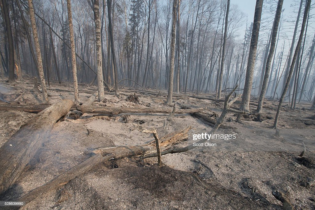 Trees charred by a wildfire continue to smolder along along Highway 63 on May 6, 2016 in Fort McMurray, Alberta, Canada Wildfires, which are still burning out of control, have forced the evacuation of more than 80,000 residents from the town.