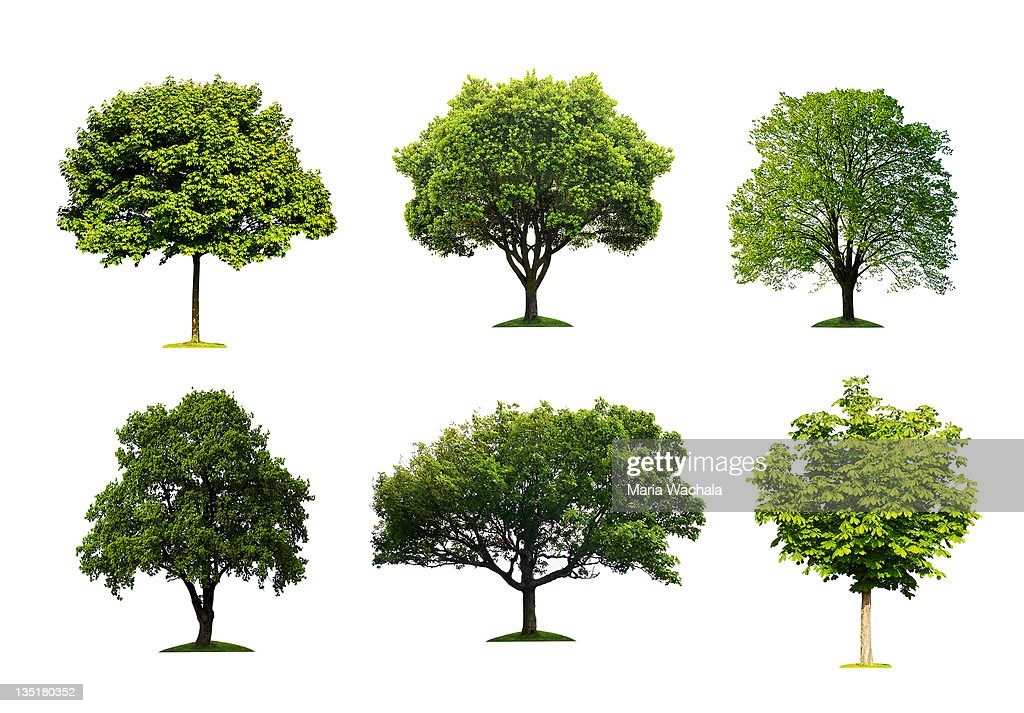 Trees collection : Stock Photo