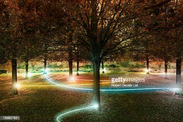 Trees connected by light trails.