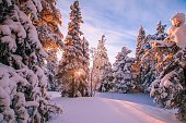 Forest covered with hoarfrost and snow in winter mountains - Christmas background