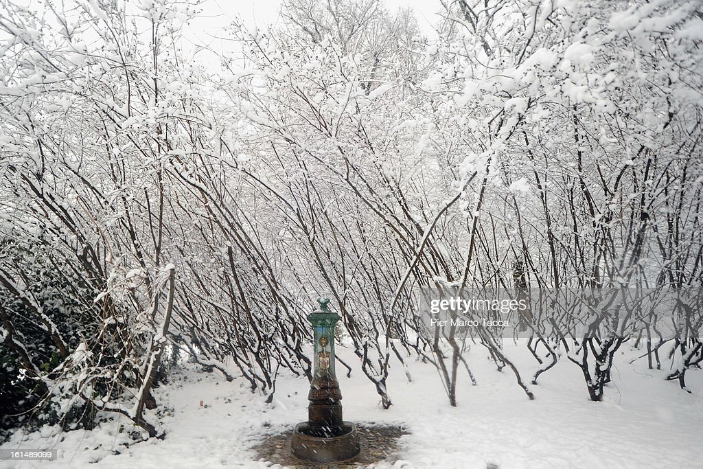 Trees covered with snow on February 11, 2013 in Milan, Italy.Wind, snow and tempetarture under zero over the country has affected regions from North Italy to South Italy, transports has been affected with train cancellations and road closures.