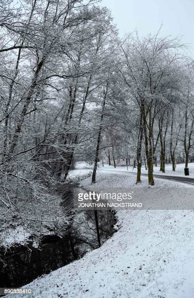 Trees covered with snow pictured on December 11 2017 in Sundbyberg near Stockholm High winds and heavy snow in Europe on Monday stranded thousands of...