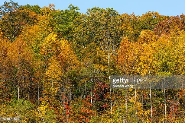Trees during Fall colors