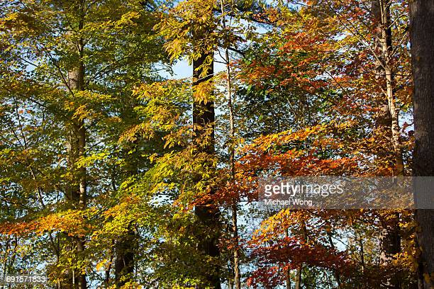 trees during Fall foliage