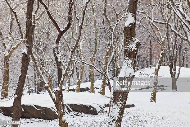 Trees dusted with snow in Central Park in winter.