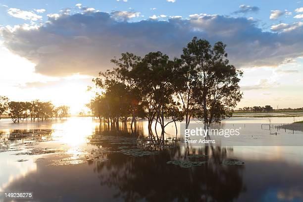Trees & Flooded Creek, Rockhampton, Queensland