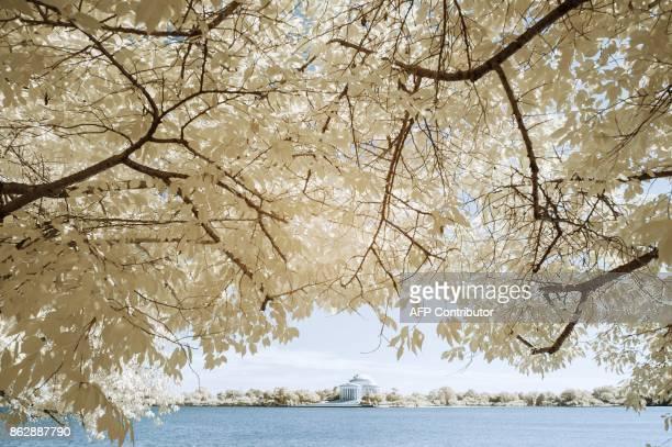 Trees frame the Jefferson Memorial across the Tidal Basin in Washington DC on September 20 2017 / AFP PHOTO / Andrew CABALLEROREYNOLDS