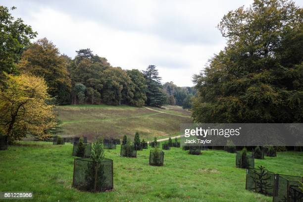Trees grow at Wakehurst 30 years after The Great Storm devastated much of the botanic garden's landscape on October 14 2017 in Haywards Heath England...