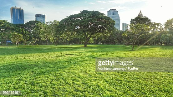 Trees Growing Against Sky At Park In City
