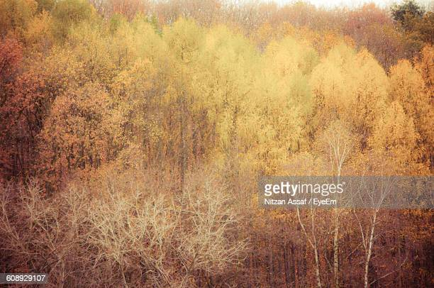 Trees Growing At Forest During Autumn